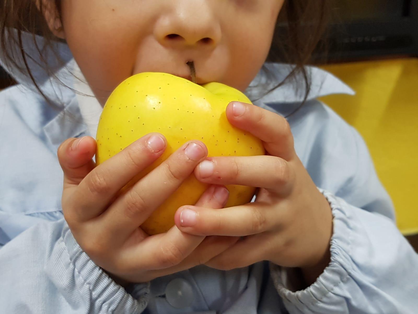 Educació Infantil. Hospitalet. Sant Josep Obrer. Fruits de la tardor (26)